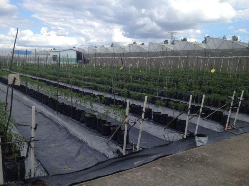 Báo giá cuộn màng bạt phủ nông nghiệp PE, bạt đen phủ đất chống cỏ dại